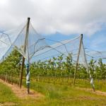 Siatka sadownicza – wybierz najlepszą ochronę dla swoich drzew