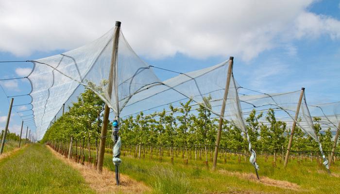 Siatki na drzewa - Sieci-siatki -producent siatek i sieci