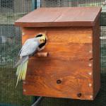 Siatki na woliery dla papug