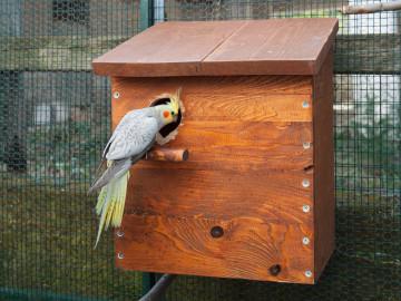 Siatki na papugi