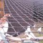 Siatki dla gołębi