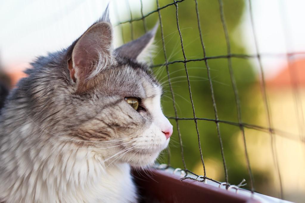 Siatki na balkon, siatki na kota