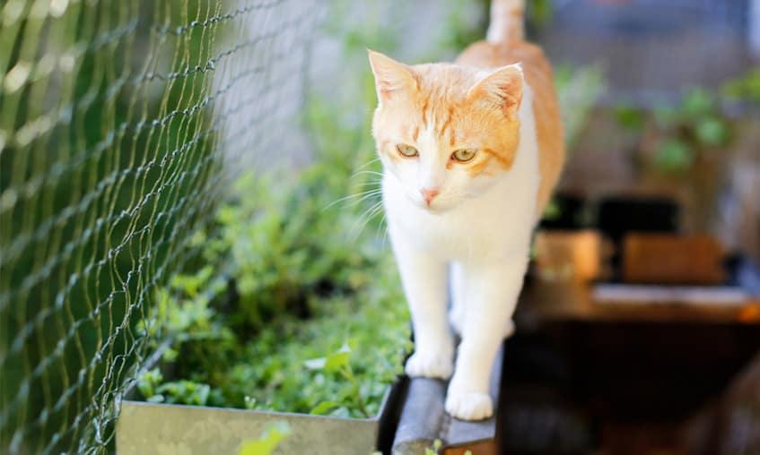 Siatka na kota i kot na poręczy - zdjęcie