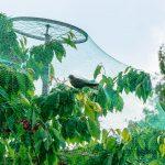 Jak chronić drzewa i krzewy przed ptactwem?