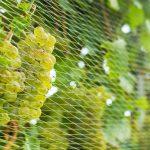 Siatki na borówki, winogrona i inne krzewy owocowe