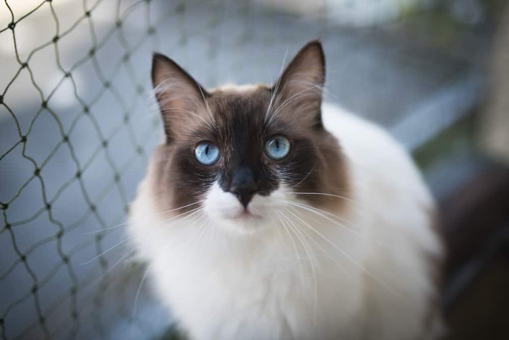 Jak zabezpieczyć balkon przed kotem? Sieci-siatki.pl