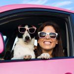 Siatka do samochodu dla psa i inne rozwiązania, które pozwolą bezpiecznie przewozić pupila