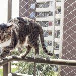 Jak wybrać siatkę zabezpieczającą okno uchylne przed kotem?