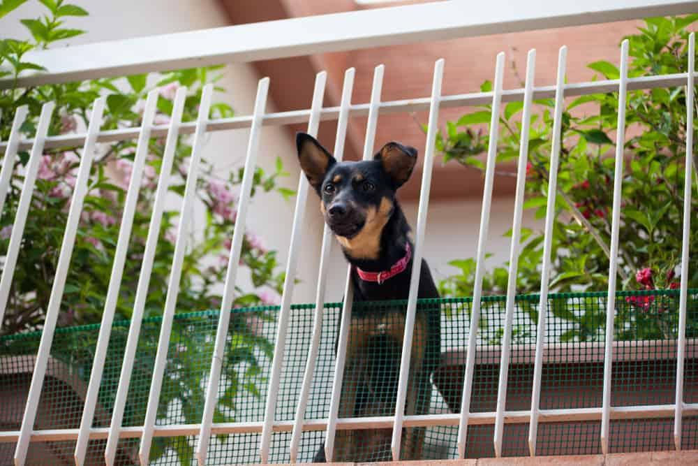 Siatka na balkon dla psa - Sieci-siatki.pl
