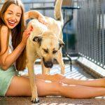 Siatka na balkon dla psa – ochrona zwierzaka przed wypadnięciem