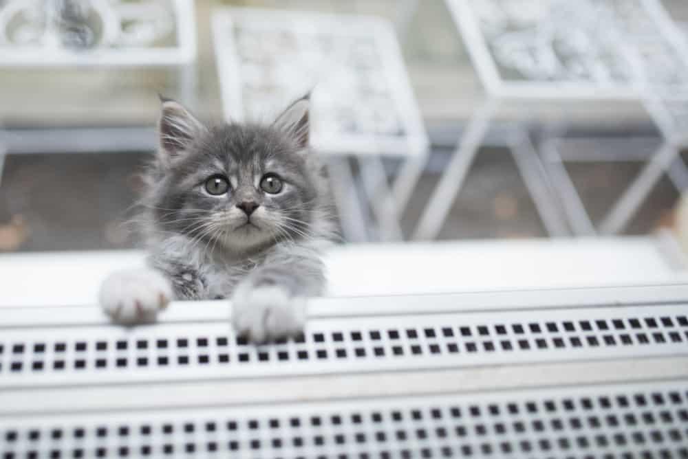 Siatka ochronna na okno dla kota - sieci-siatki.pl