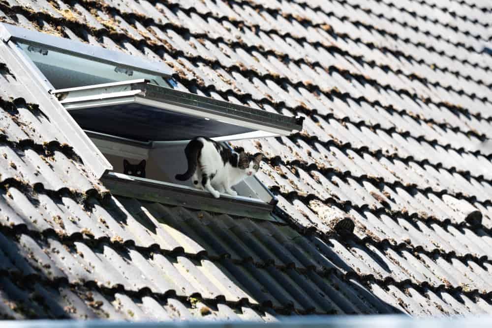 Okno dachowe dla kota - sieci-siatki.pl