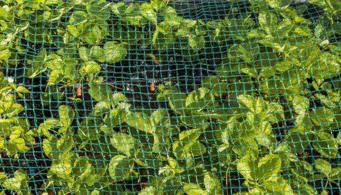 Siatka ochronna do upraw - sieci-siatki