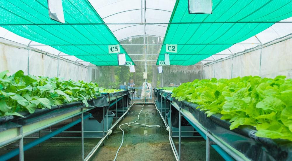 Siatki cieniujące - przydatne rozwiązanie na każdą plantację
