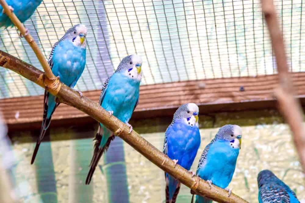 Siatka na woliery dla papug - sieci-siatki