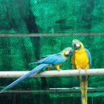 Jaką siatkę na woliery dla papug warto wybrać?