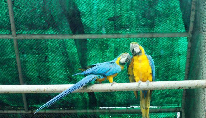 Papużki w wolierze