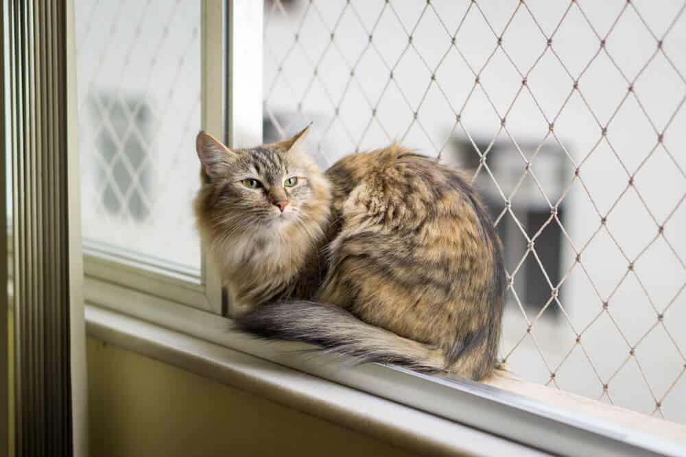 Siatka ochronna na okno